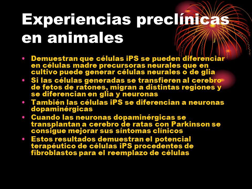 Experiencias preclínicas en animales Demuestran que células iPS se pueden diferenciar en células madre precursoras neurales que en cultivo puede gener