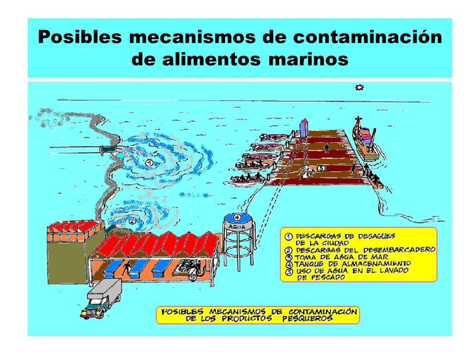 Posibles mecanismos de contaminación de alimentos marinos