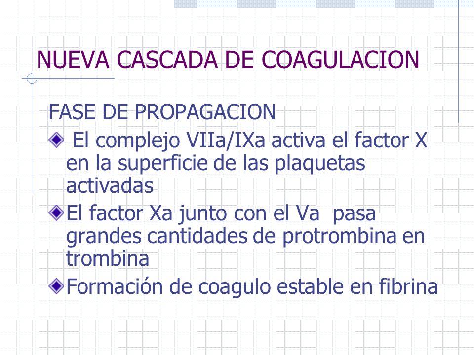 NUEVA CASCADA DE COAGULACION FASE DE PROPAGACION El complejo VIIa/IXa activa el factor X en la superficie de las plaquetas activadas El factor Xa junt