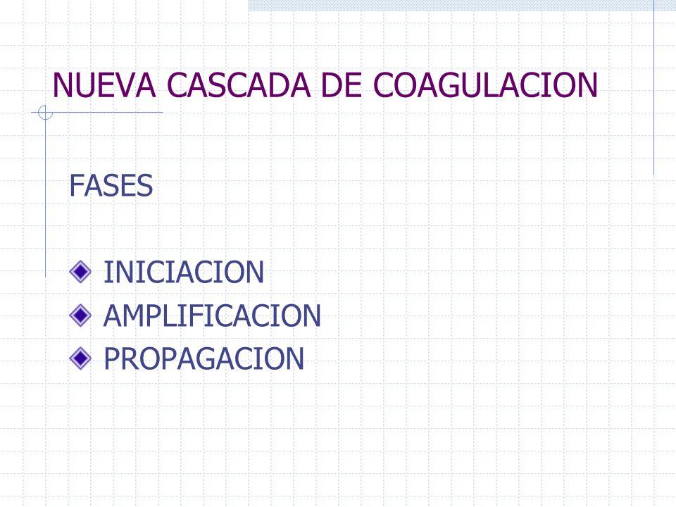 NUEVA CASCADA DE COAGULACION FASES INICIACION AMPLIFICACION PROPAGACION