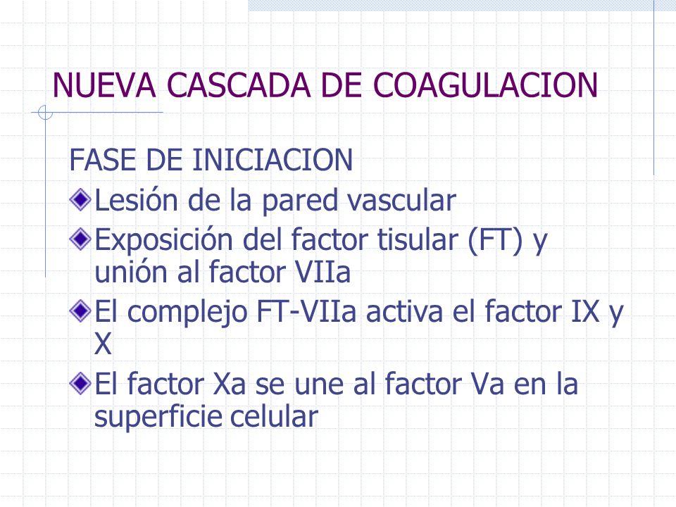 NUEVA CASCADA DE COAGULACION FASE DE INICIACION Lesión de la pared vascular Exposición del factor tisular (FT) y unión al factor VIIa El complejo FT-V