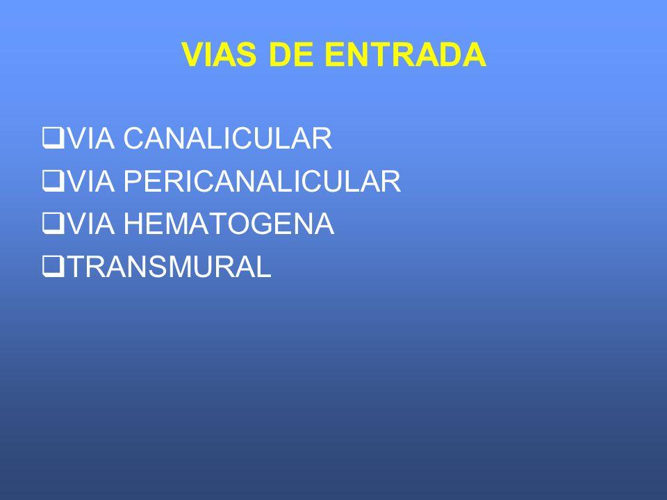 VIAS DE ENTRADA VIA CANALICULAR VIA PERICANALICULAR VIA HEMATOGENA TRANSMURAL