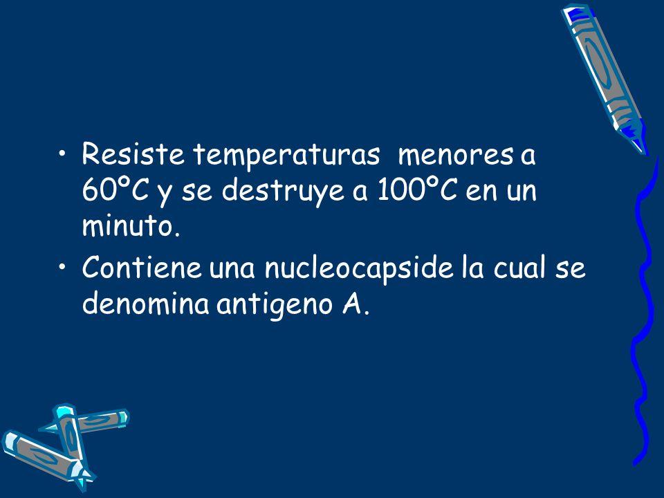 Resiste temperaturas menores a 60ºC y se destruye a 100ºC en un minuto. Contiene una nucleocapside la cual se denomina antigeno A.