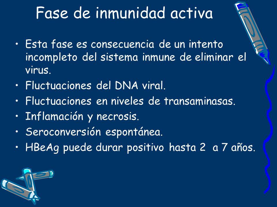 Fase de inmunidad activa Esta fase es consecuencia de un intento incompleto del sistema inmune de eliminar el virus. Fluctuaciones del DNA viral. Fluc