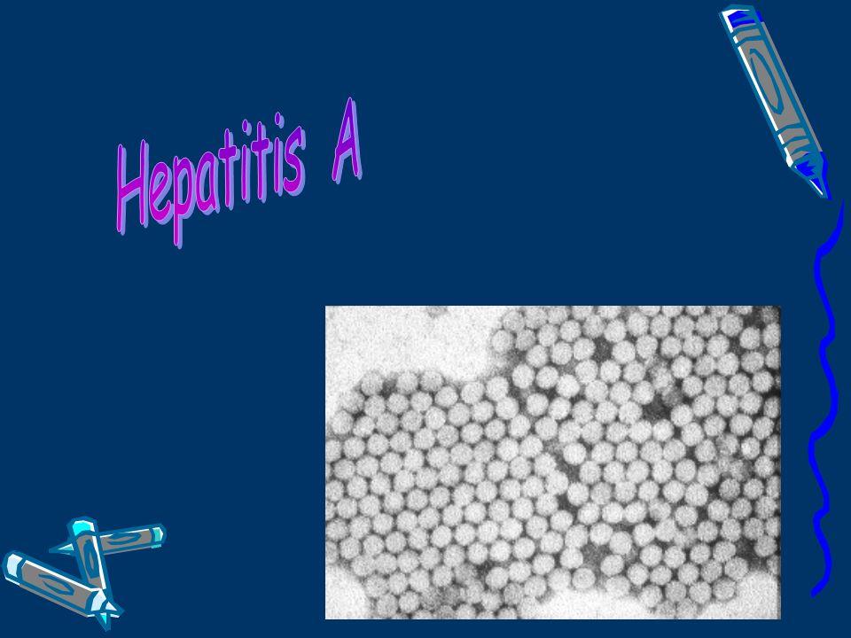 Hepatitis A Epidemiología - Prevalencia e incidencia: Se estima que hay 1.5 millones de casos de hepatitis A - la mayoría de los cuales ocurren en áreas con mala higiene y una mala infraestructura sanitaria.