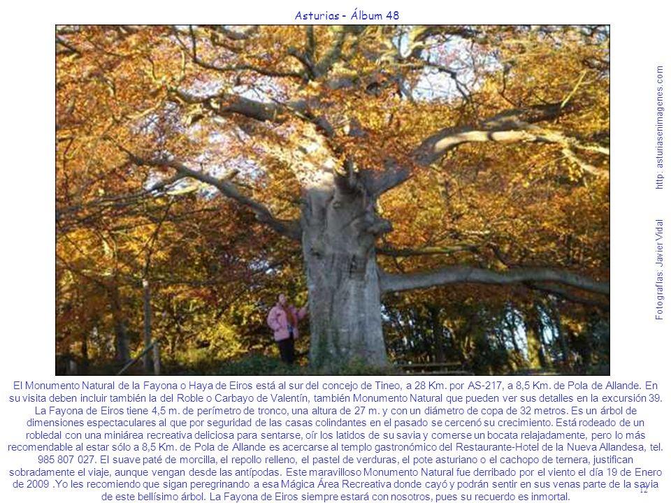 12 Asturias - Álbum 48 Fotografías: Javier Vidal http: asturiasenimagenes.com El Monumento Natural de la Fayona o Haya de Eiros está al sur del concej