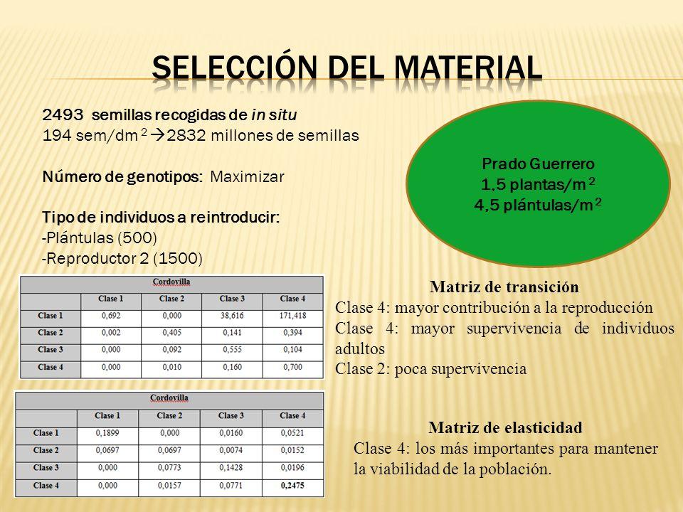 2493 semillas recogidas de in situ 194 sem/dm 2 2832 millones de semillas Número de genotipos: Maximizar Tipo de individuos a reintroducir: -Plántulas