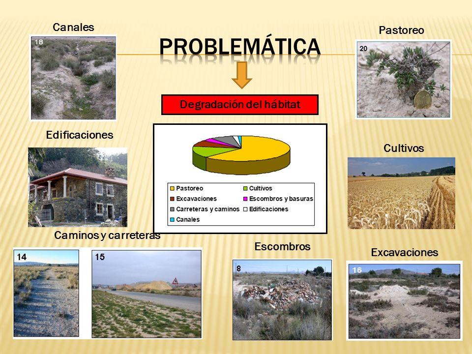 Escombros Caminos y carreteras Excavaciones Canales Pastoreo Cultivos Edificaciones Degradación del hábitat