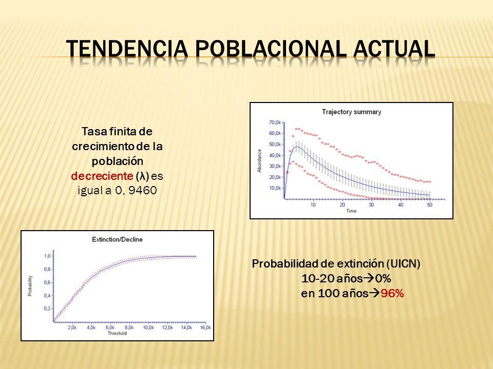 Tasa finita de crecimiento de la población decreciente (λ) es igual a 0, 9460 Probabilidad de extinción (UICN) 10-20 años 0% en 100 años 96%