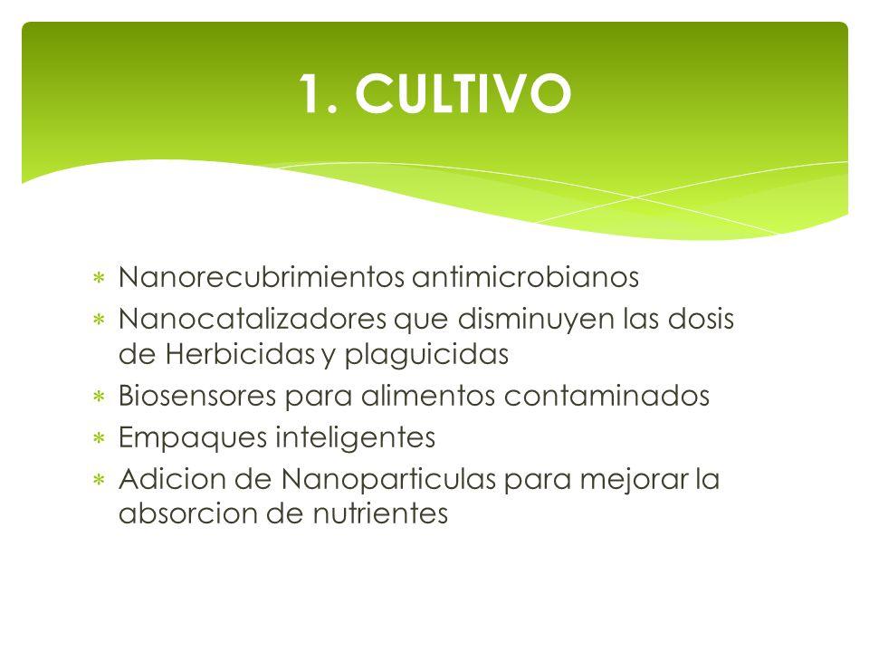 1. CULTIVO Nanorecubrimientos antimicrobianos Nanocatalizadores que disminuyen las dosis de Herbicidas y plaguicidas Biosensores para alimentos contam