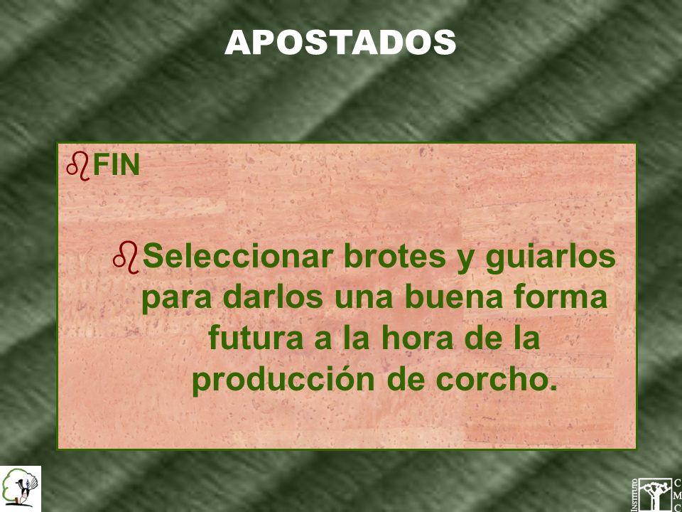 APOSTADOS bFIN bSeleccionar brotes y guiarlos para darlos una buena forma futura a la hora de la producción de corcho.