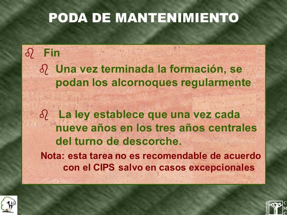 b Eliminación de las ramas secas, enfermas, dominadas o defectuosas b No se deberán realizar cortes de ramas de más de 20 cm.