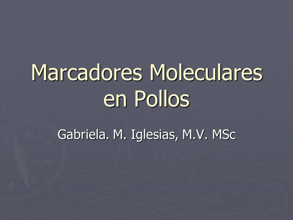 Marcadores Moleculares en Pollos Gabriela. M. Iglesias, M.V. MSc