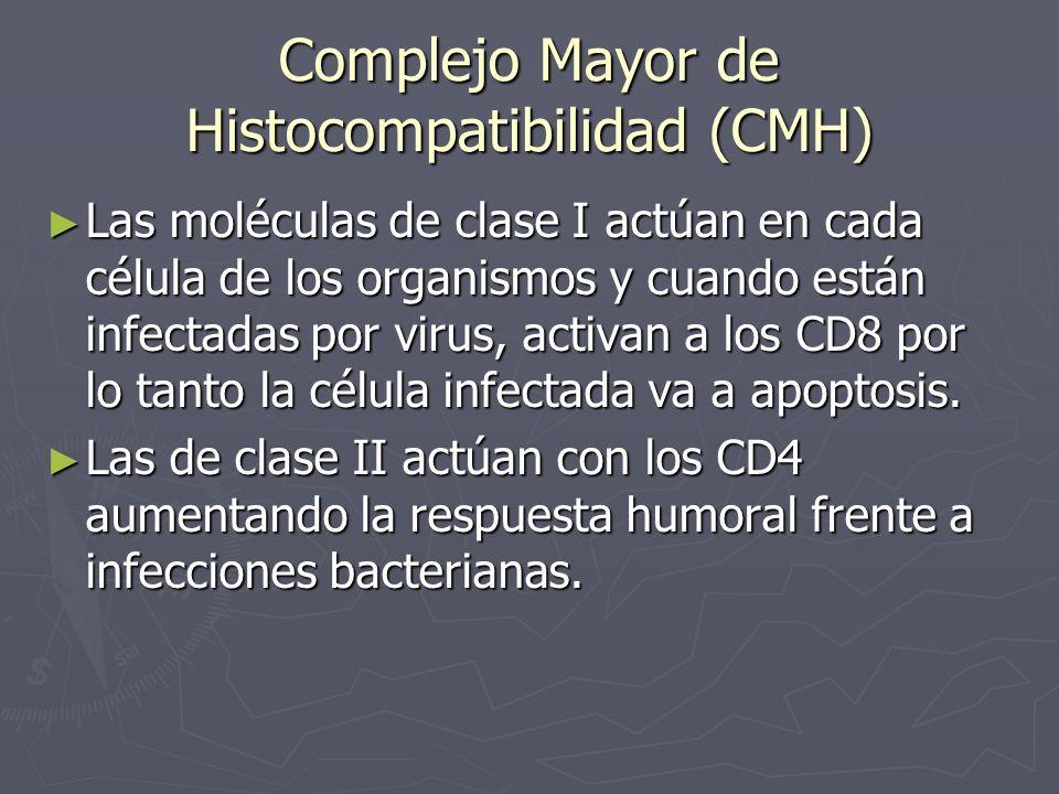 Complejo Mayor de Histocompatibilidad (CMH) Las moléculas de clase I actúan en cada célula de los organismos y cuando están infectadas por virus, acti