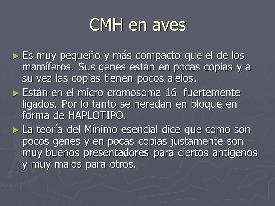 CMH en aves Es muy pequeño y más compacto que el de los mamíferos. Sus genes están en pocas copias y a su vez las copias tienen pocos alelos. Es muy p