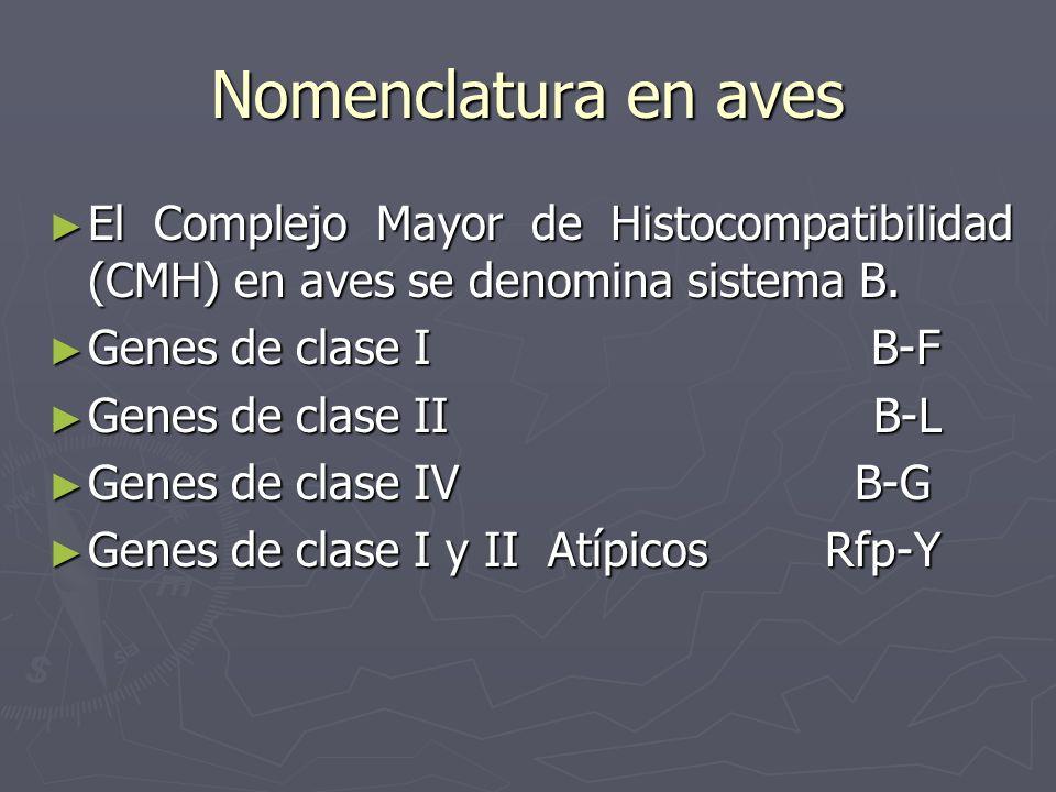 Nomenclatura en aves El Complejo Mayor de Histocompatibilidad (CMH) en aves se denomina sistema B. El Complejo Mayor de Histocompatibilidad (CMH) en a
