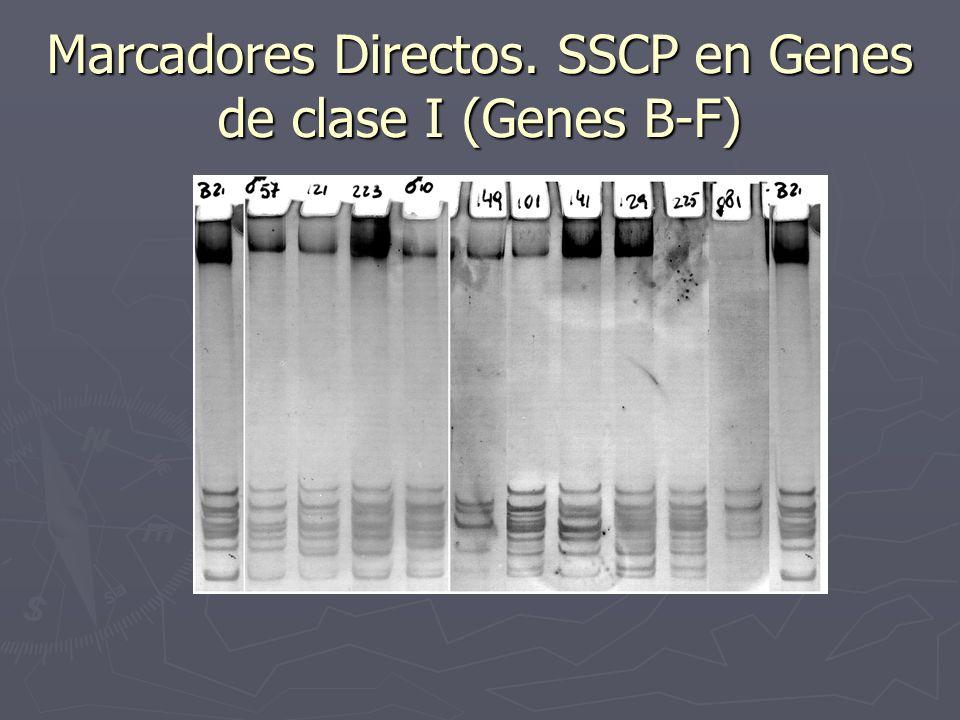 Marcadores Directos. SSCP en Genes de clase I (Genes B-F)