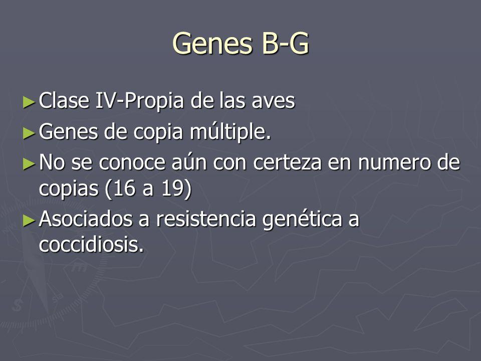 Genes B-G Clase IV-Propia de las aves Clase IV-Propia de las aves Genes de copia múltiple. Genes de copia múltiple. No se conoce aún con certeza en nu