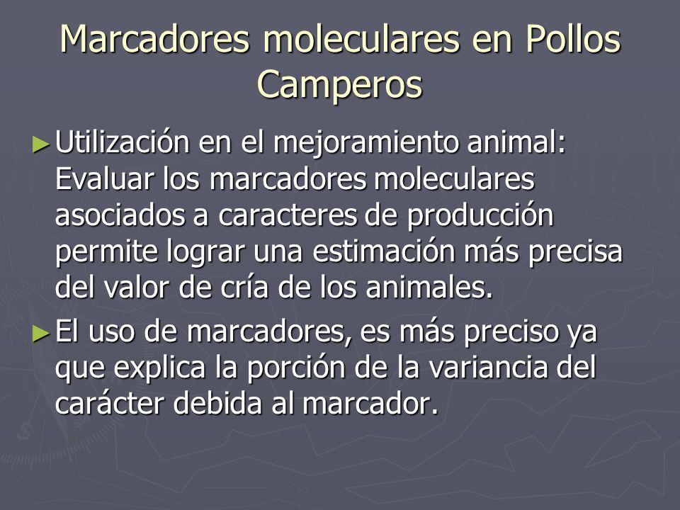 Marcadores moleculares en Pollos Camperos Utilización en el mejoramiento animal: Evaluar los marcadores moleculares asociados a caracteres de producci
