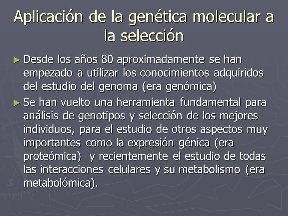 Aplicación de la genética molecular a la selección Desde los años 80 aproximadamente se han empezado a utilizar los conocimientos adquiridos del estud