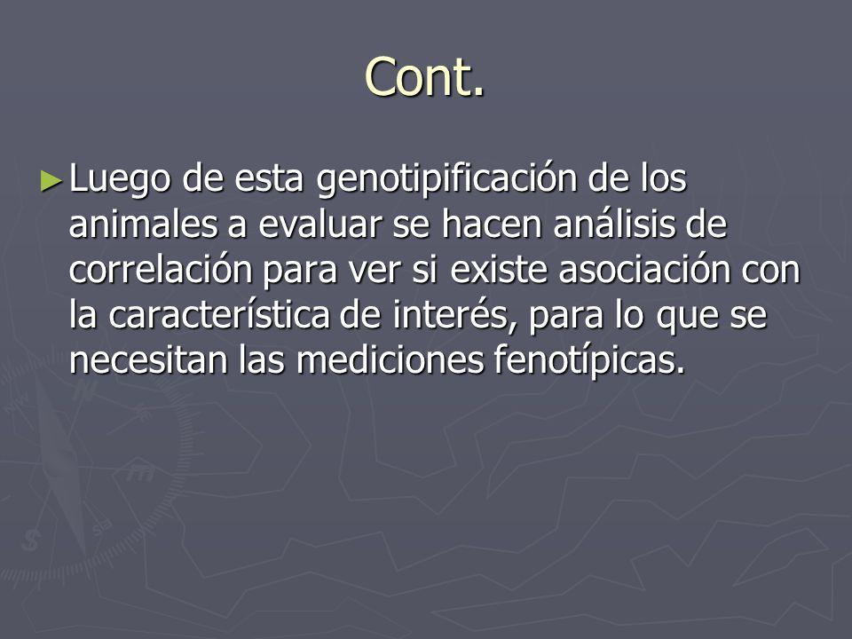 Cont. Luego de esta genotipificación de los animales a evaluar se hacen análisis de correlación para ver si existe asociación con la característica de
