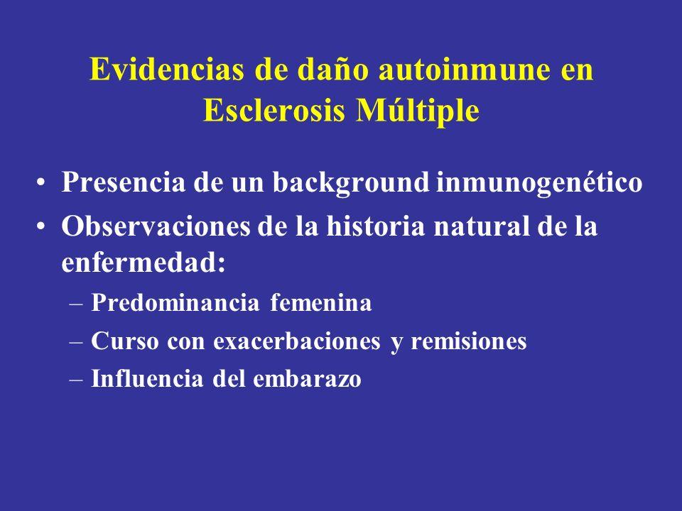 Evidencias de daño autoinmune en Esclerosis Múltiple Presencia de un background inmunogenético Observaciones de la historia natural de la enfermedad: