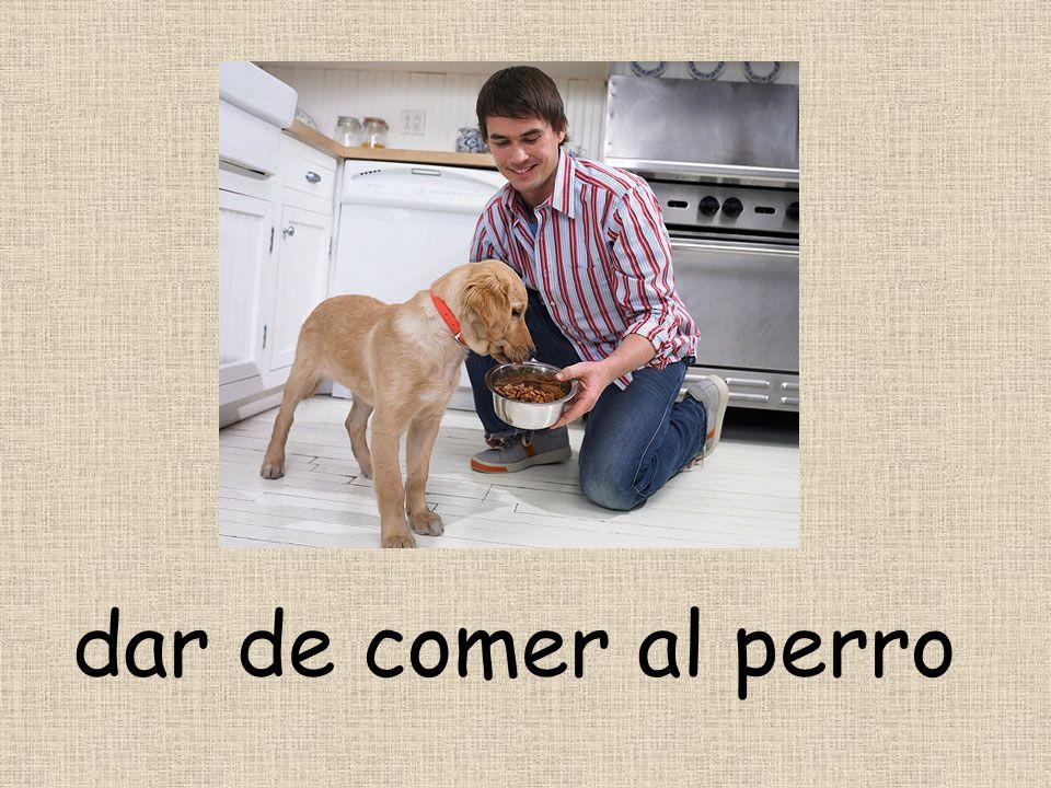 dar de comer al perro