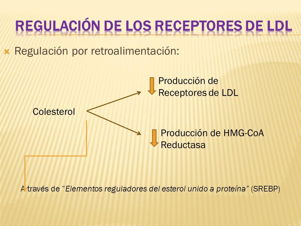 Colesterol Producción de Receptores de LDL Producción de HMG-CoA Reductasa A través de Elementos reguladores del esterol unido a proteína (SREBP) Regu