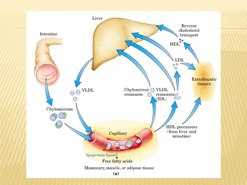 Herencia autosoma dominante HOMOCIGOTAHETEROCIGOTA Mas graveMenos grave INCIDENCIA 1 en 1 millon1 de 500 personas DEFICIENCIA100% RLDL50% RLDL LDL plasma6 A 10 veces2 veces