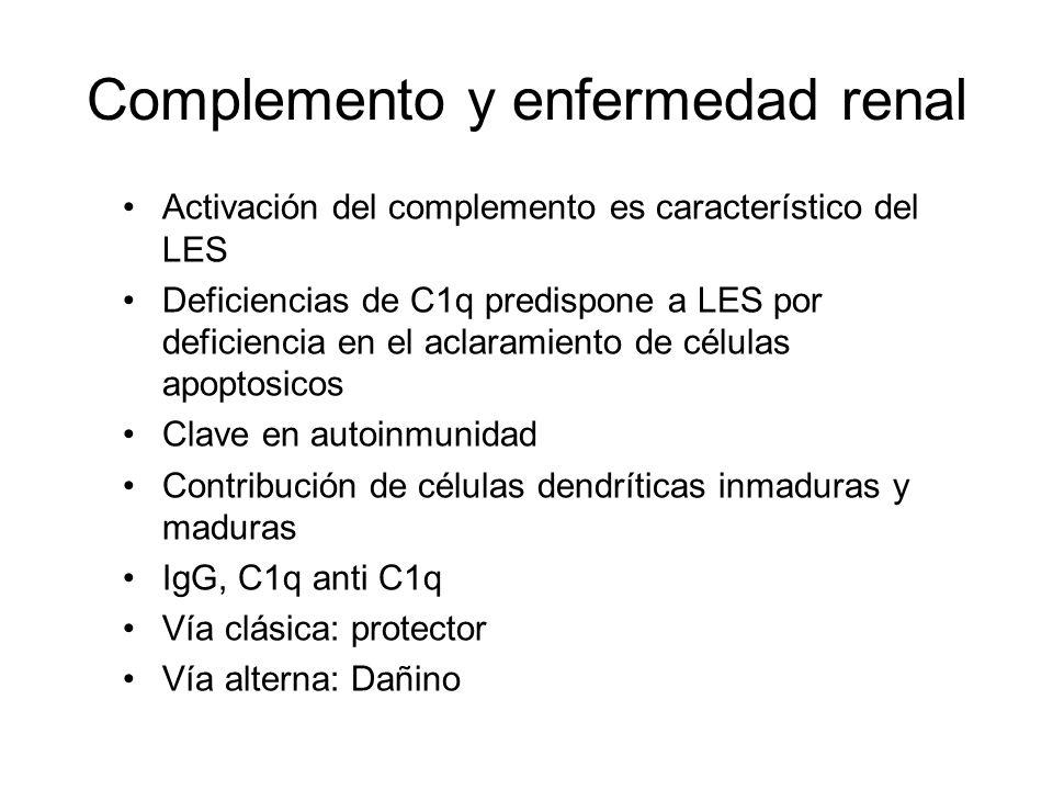 Complemento y enfermedad renal Activación del complemento es característico del LES Deficiencias de C1q predispone a LES por deficiencia en el aclaram