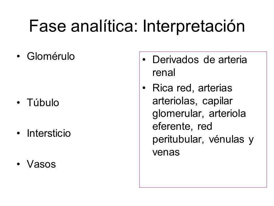 Fase analítica: Interpretación Glomérulo Túbulo Intersticio Vasos Derivados de arteria renal Rica red, arterias arteriolas, capilar glomerular, arteri