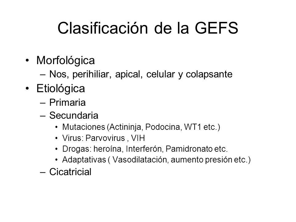 Clasificación de la GEFS Morfológica –Nos, perihiliar, apical, celular y colapsante Etiológica –Primaria –Secundaria Mutaciones (Actininja, Podocina,