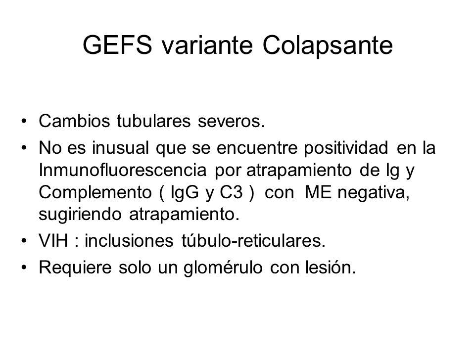 GEFS variante Colapsante Cambios tubulares severos. No es inusual que se encuentre positividad en la Inmunofluorescencia por atrapamiento de Ig y Comp