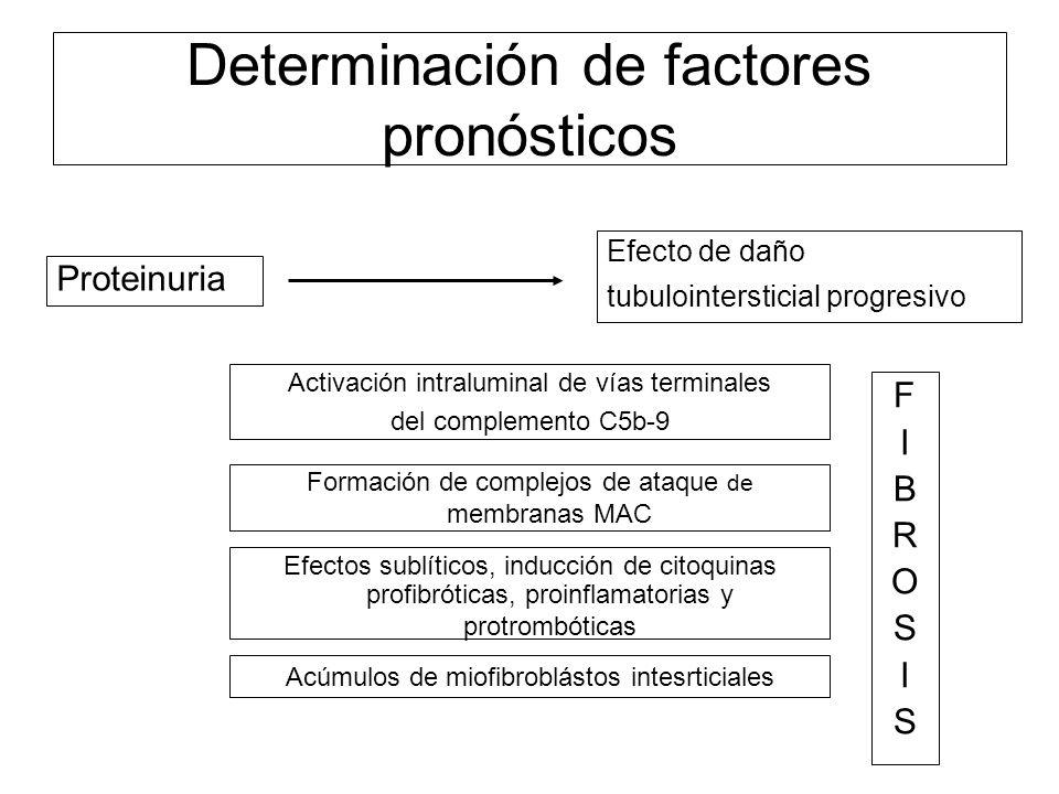 Proteinuria Efecto de daño tubulointersticial progresivo Activación intraluminal de vías terminales del complemento C5b-9 Formación de complejos de at
