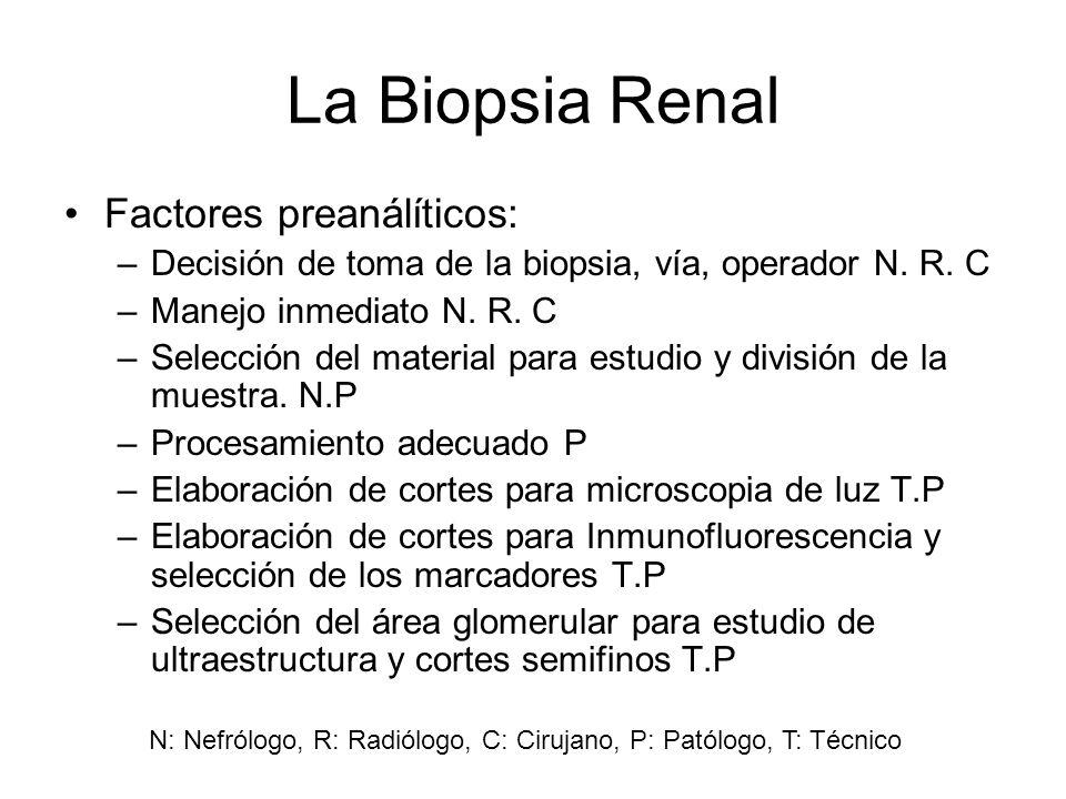 La Biopsia Renal Factores preanálíticos: –Decisión de toma de la biopsia, vía, operador N. R. C –Manejo inmediato N. R. C –Selección del material para