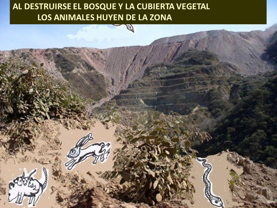 . AL DESTRUIRSE EL BOSQUE Y LA CUBIERTA VEGETAL LOS ANIMALES HUYEN DE LA ZONA
