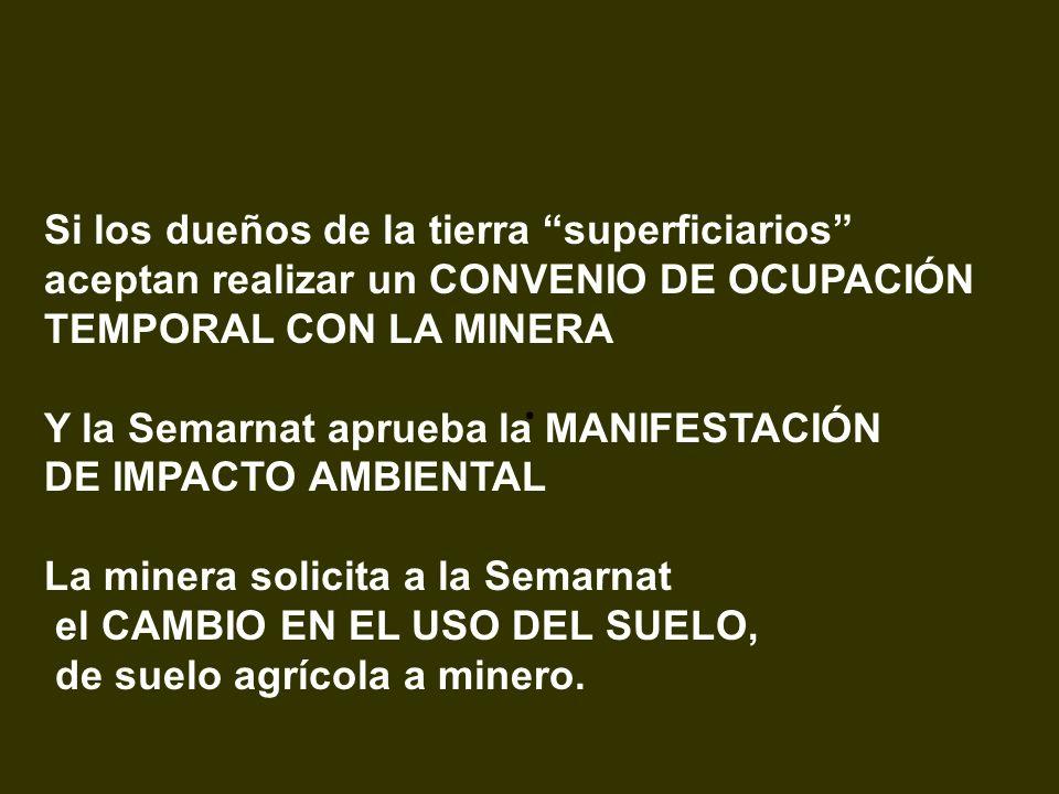 . Si los dueños de la tierra superficiarios aceptan realizar un CONVENIO DE OCUPACIÓN TEMPORAL CON LA MINERA Y la Semarnat aprueba la MANIFESTACIÓN DE
