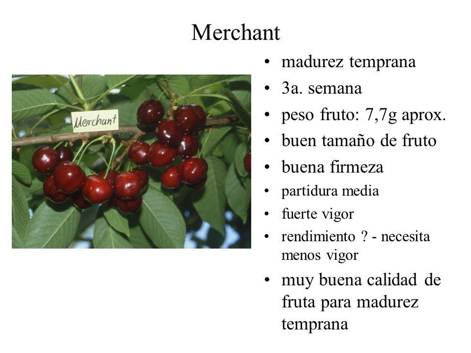 Merchant madurez temprana 3a. semana peso fruto: 7,7g aprox. buen tamaño de fruto buena firmeza partidura media fuerte vigor rendimiento ? - necesita