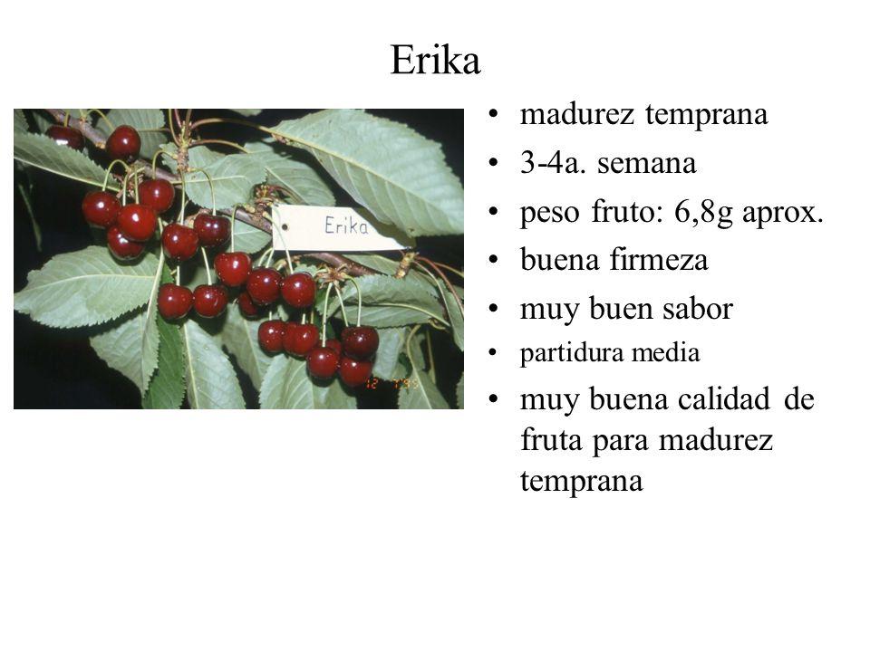 Erika madurez temprana 3-4a. semana peso fruto: 6,8g aprox. buena firmeza muy buen sabor partidura media muy buena calidad de fruta para madurez tempr