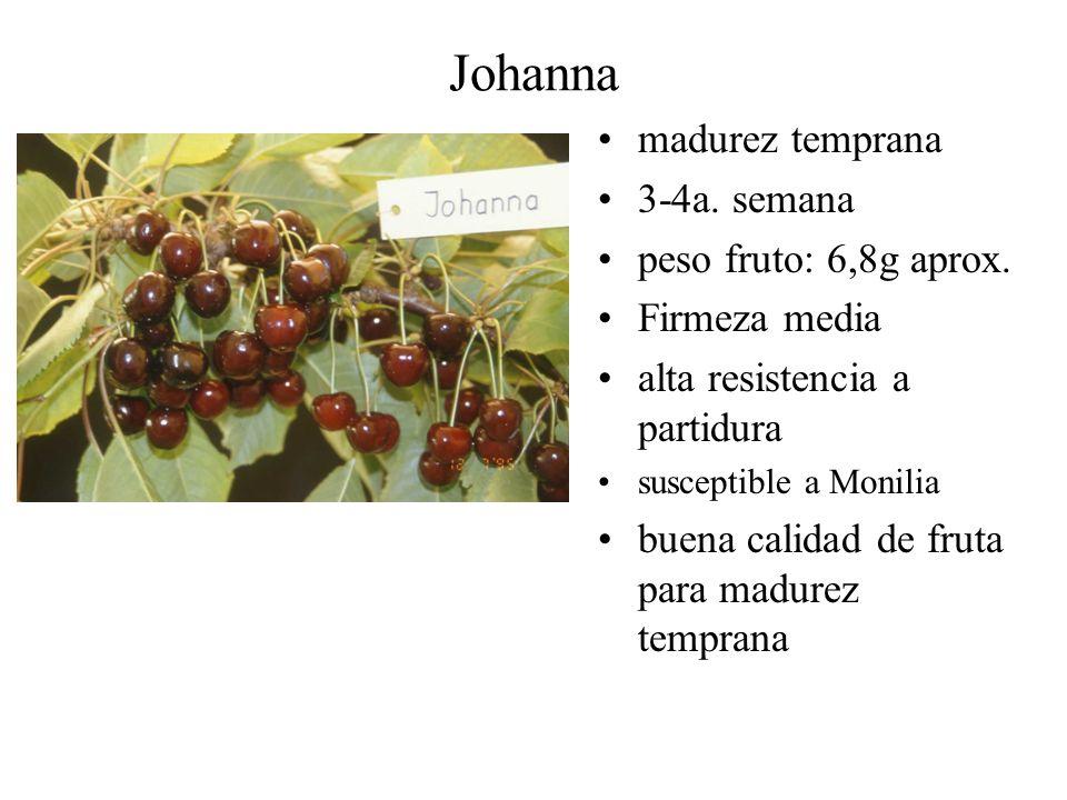Johanna madurez temprana 3-4a. semana peso fruto: 6,8g aprox. Firmeza media alta resistencia a partidura susceptible a Monilia buena calidad de fruta