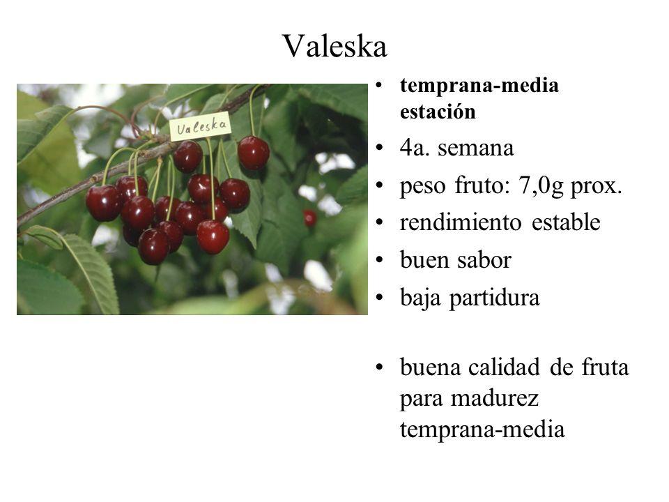 Valeska temprana-media estación 4a. semana peso fruto: 7,0g prox. rendimiento estable buen sabor baja partidura buena calidad de fruta para madurez te