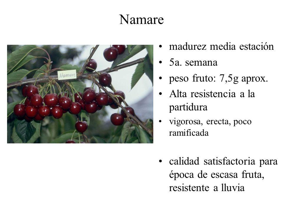 Namare madurez media estación 5a. semana peso fruto: 7,5g aprox. Alta resistencia a la partidura vigorosa, erecta, poco ramificada calidad satisfactor