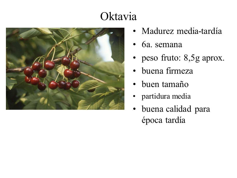 Oktavia Madurez media-tardía 6a. semana peso fruto: 8,5g aprox. buena firmeza buen tamaño partidura media buena calidad para época tardía