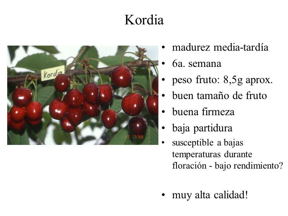 Kordia madurez media-tardía 6a. semana peso fruto: 8,5g aprox. buen tamaño de fruto buena firmeza baja partidura susceptible a bajas temperaturas dura