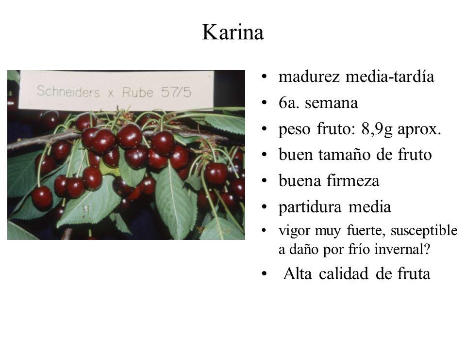 Karina madurez media-tardía 6a. semana peso fruto: 8,9g aprox. buen tamaño de fruto buena firmeza partidura media vigor muy fuerte, susceptible a daño