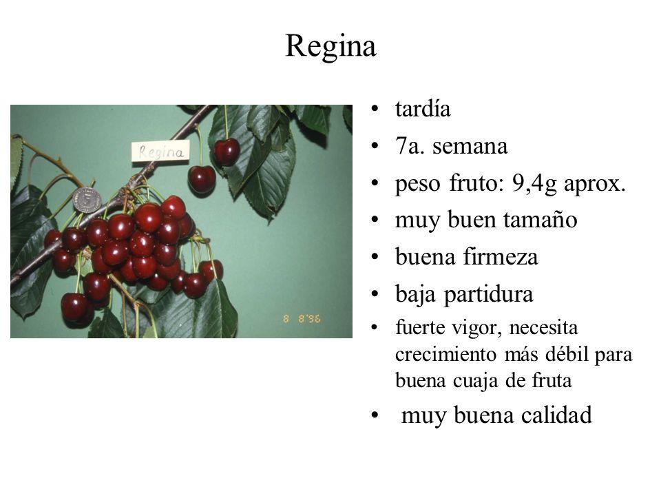 Regina tardía 7a. semana peso fruto: 9,4g aprox. muy buen tamaño buena firmeza baja partidura fuerte vigor, necesita crecimiento más débil para buena