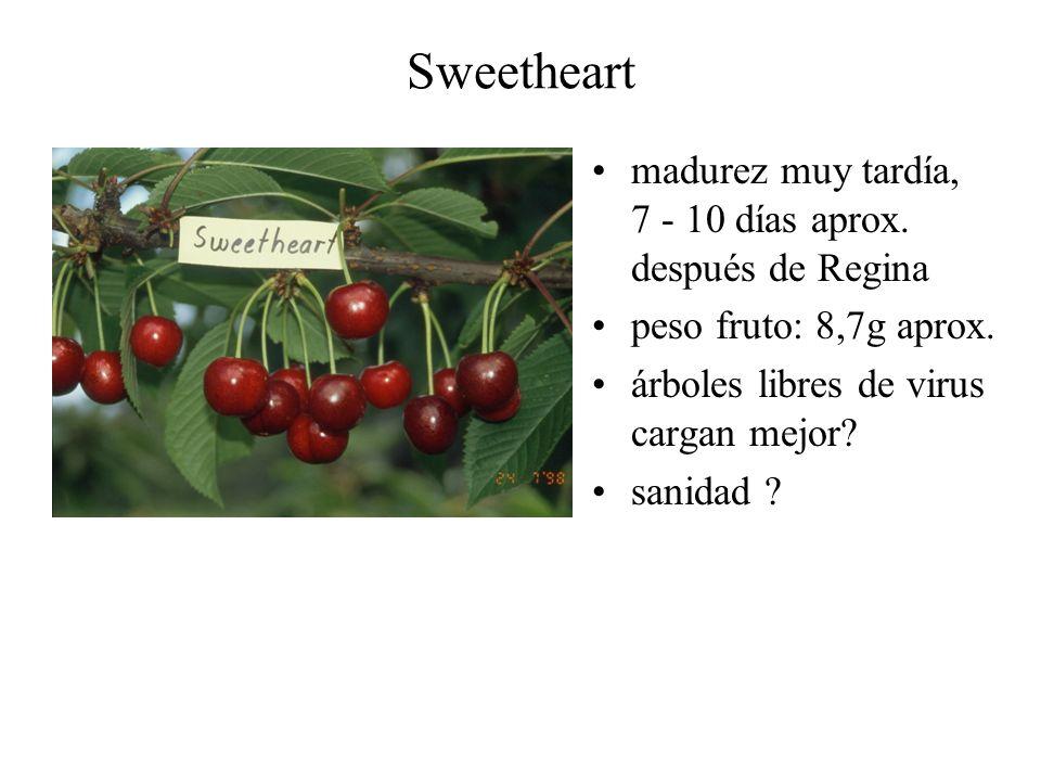 Sweetheart madurez muy tardía, 7 - 10 días aprox. después de Regina peso fruto: 8,7g aprox. árboles libres de virus cargan mejor? sanidad ?