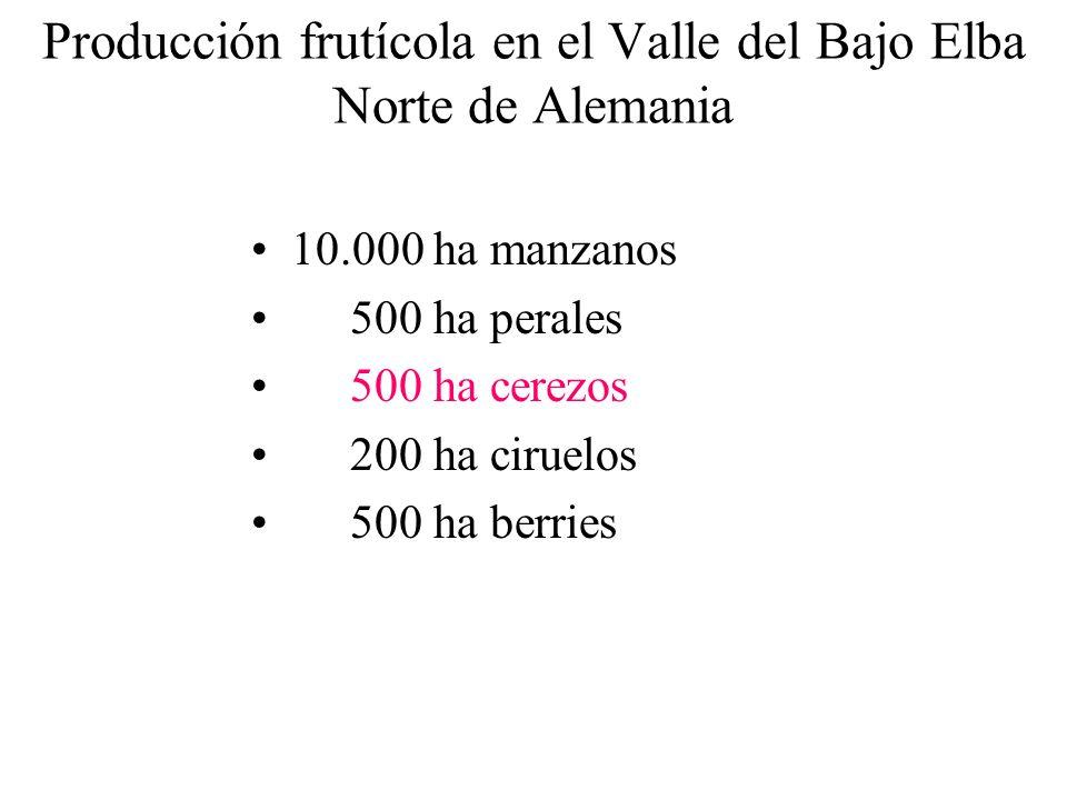 Producción frutícola en el Valle del Bajo Elba Norte de Alemania 10.000 ha manzanos 500 ha perales 500 ha cerezos 200 ha ciruelos 500 ha berries