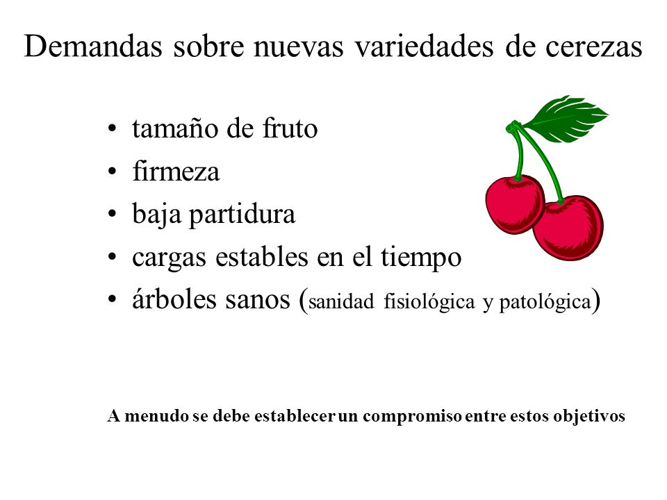Demandas sobre nuevas variedades de cerezas tamaño de fruto firmeza baja partidura cargas estables en el tiempo árboles sanos ( sanidad fisiológica y