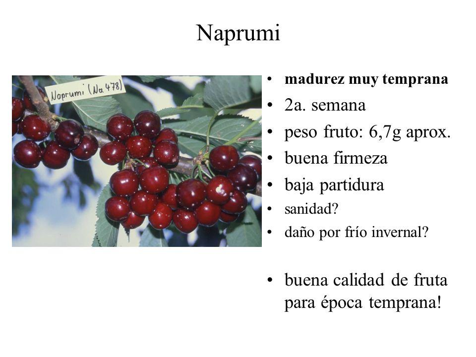 Naprumi madurez muy temprana 2a. semana peso fruto: 6,7g aprox. buena firmeza baja partidura sanidad? daño por frío invernal? buena calidad de fruta p